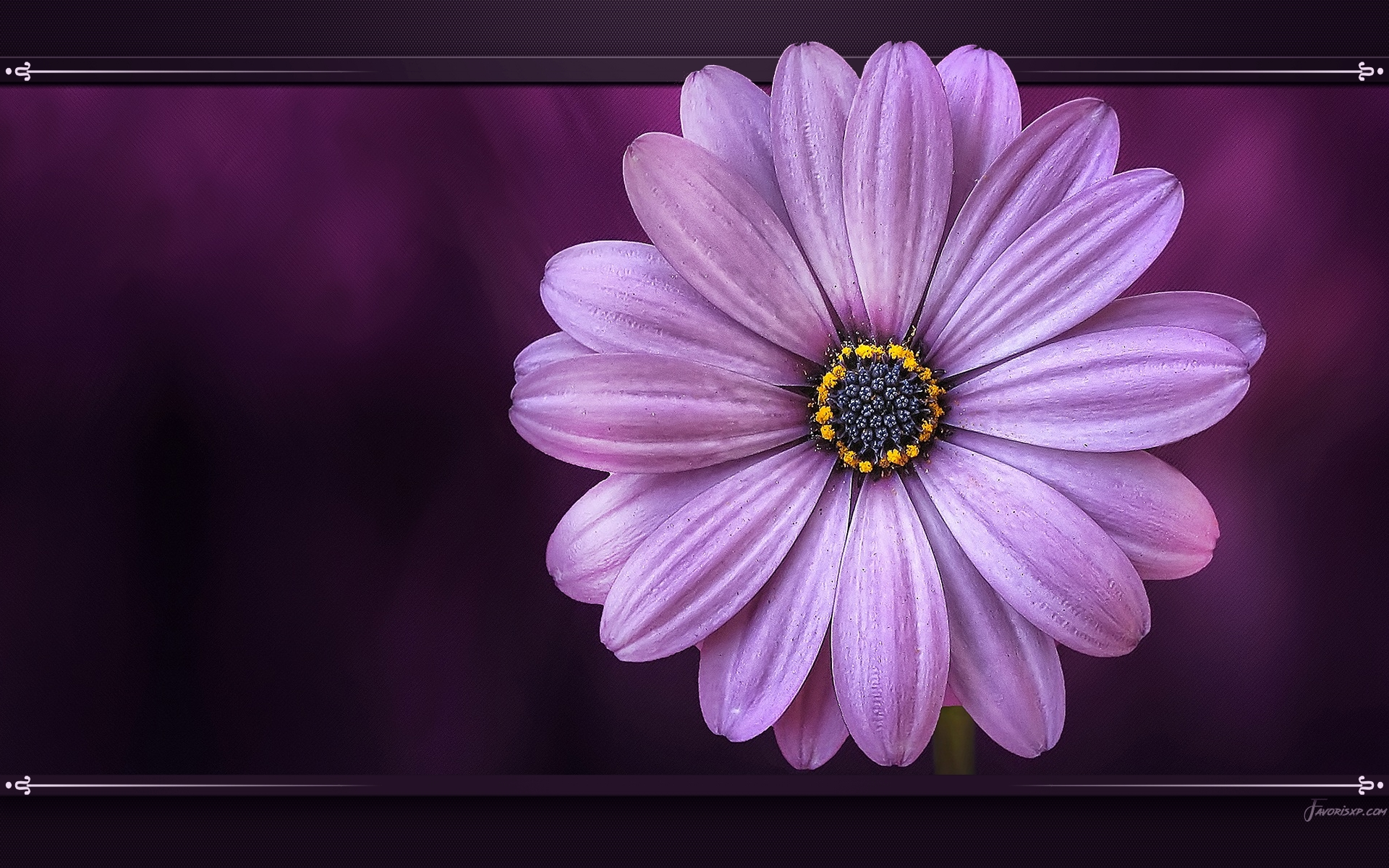 Images gratuites de fond d'écran de fleur